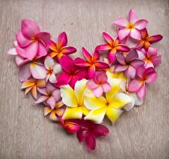 Fotos Valentinstag Frangipani Herz Design Blumen