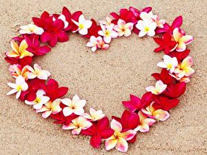 Hintergrundbilder Valentinstag Frangipani Herz Design Sand Blüte