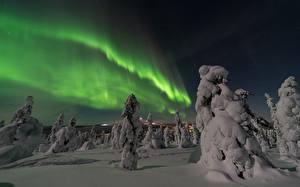 Bilder Winter Nacht Fichten Schnee Polarlicht
