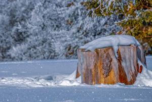 Hintergrundbilder Winter Baumstumpf Schnee Natur