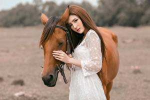 Bilder Asiatische Pferde Braunhaarige Mädchens Tiere