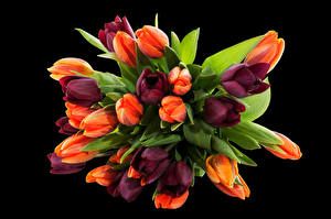 Pictures Bouquets Tulips Black background Flowers