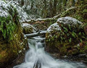 Bilder Kanada Park Wasserfall Schnee Laubmoose Bäche Vancouver Island Parks Natur
