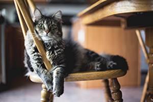 Katze Stuhl Pfote Tiere