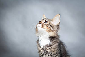 Picture Cats Kittens Staring