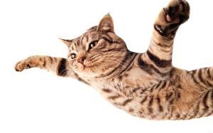 Fotos Katze Pfote Flug Fallen Weißer hintergrund Tiere