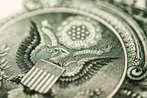 Images Closeup Eagle Dollars Macro photography