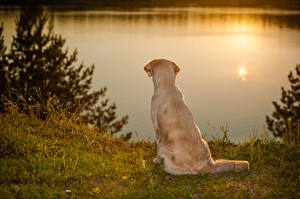 Images Dogs Golden Retriever Coast Sunrises and sunsets Animals