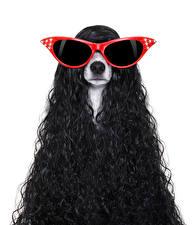 Fondos de escritorio Perros Rizado El fondo blanco Jack Russell Terrier Lentes Un animal Animalia