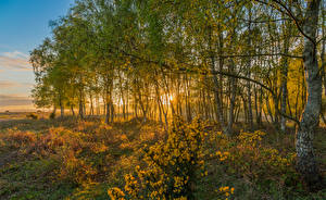 Fonds d'écran Angleterre Parc Automne Arbres Rockford New Forest National Park