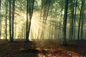 Bilder Wälder Bäume Lichtstrahl