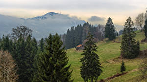 Images Germany Mountains Building Meadow Bavaria Spruce Brackenberg