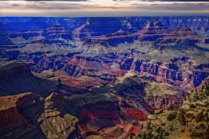 Fotos Grand Canyon Park Vereinigte Staaten Park Gebirge Laubmoose Natur