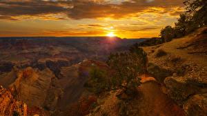Bilder Grand Canyon Park Vereinigte Staaten Park Morgendämmerung und Sonnenuntergang Strauch Felsen Canyons