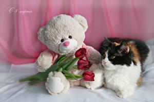 Bilder Feiertage 8 März Hauskatze Tulpen Teddybär Russische Drei 3 Rot Blüte Tiere