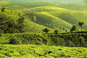 Fotos Indien Acker Hügel Munnar