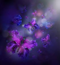 Bilder Schwertlilien Schmetterlinge Design Blüte