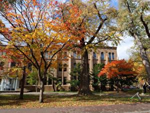 Fonds d'écran Japon Maison Automne Arbres Hokkaido University Sapporo Villes