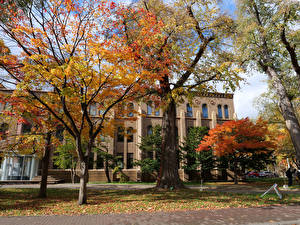 Picture Japan Houses Autumn Trees Hokkaido University Sapporo Cities