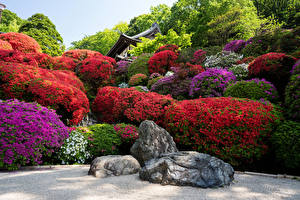 Pictures Japan Kyoto Gardens Rhododendron Stones Nature