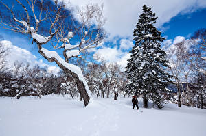 Fotos Japan Winter Schnee Bäume Fichten Sapporo Hokkaido Natur