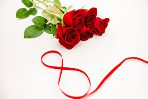 Fotos Internationaler Frauentag Rosen Rot