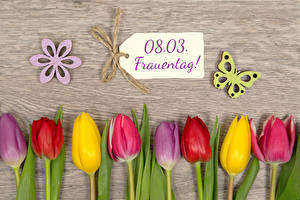 Picture March 8 Tulips Butterflies Wood planks German Multicolor Flowers