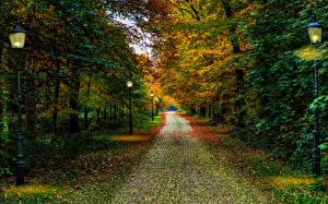 Hintergrundbilder Niederlande Herbst Park Bäume Straßenlaterne Driebergen Utrecht Natur