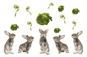 Bilder Kaninchen Kohl Mohrrübe Weißer hintergrund ein Tier