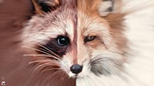 Bilder Waschbären Füchse Gezeichnet Schnauze Schnurrhaare Vibrisse Tiere