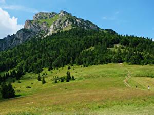 Image Slovakia Mountains Forests Meadow Tatras