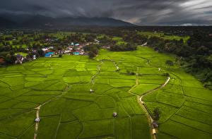 Sfondi desktop Thailandia Tropici Campo agricolo Edificio Foreste Phuket Natura