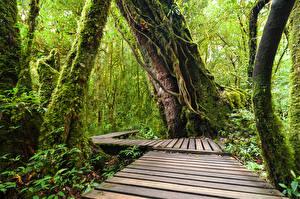 Fotos Thailand Tropen Park Wälder Laubmoose Baumstamm Doi Inthanon National Park Natur