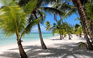 Bilder Tropen Küste Palmen Sand Strände Bahamas Natur