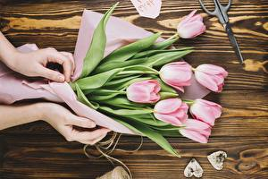 Pictures Tulips Hands Flowers