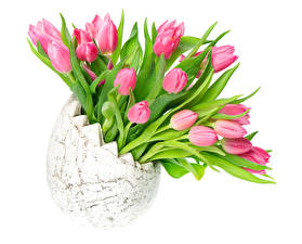 Pictures Tulips White background Vase Pink color