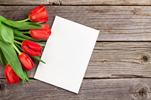 Pictures Tulips Boards Template greeting card Sheet of paper Red Flowers