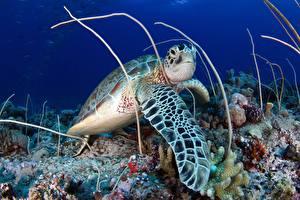 Image Turtles Underwater world animal