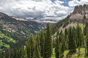 Hintergrundbilder Vereinigte Staaten Gebirge Wälder Fichten Caribou-Targhee National Forest Natur