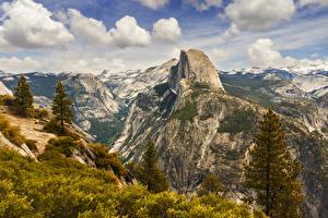 Fotos Vereinigte Staaten Park Gebirge Yosemite Fichten Natur
