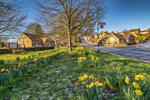 Bilder Vereinigtes Königreich Haus Narzissen Straße Baslow  Derbyshire