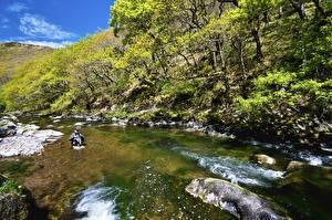 Bilder Vereinigtes Königreich Park Flusse Bäume Exmoor National Park Natur