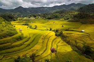 Hintergrundbilder Vietnam Acker Hügel Natur