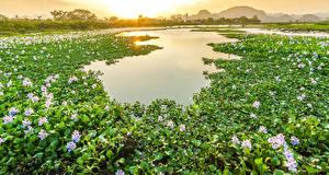 Hintergrundbilder Vietnam Seerosen Teich Sonnenaufgänge und Sonnenuntergänge Viel Natur Blumen