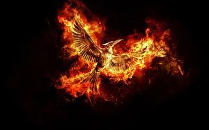 Photo Birds Phoenix mythology Flame Black background