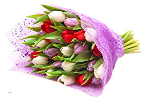 Picture Bouquets Tulips White background Multicolor