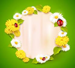 Images Matricaria Taraxacum Ladybugs Colored background Template greeting card flower