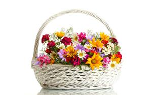 Image Camomiles Wicker basket White background Flowers