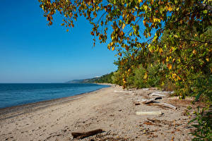 Image Canada Coast Branches Beach Toronto beach Lake Ontario Nature
