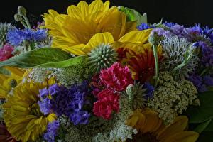 Hintergrundbilder Nelken Sonnenblumen Sträuße Blumen
